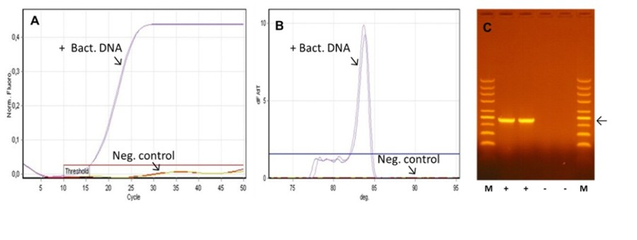 DNA-free PCR Master Mixy